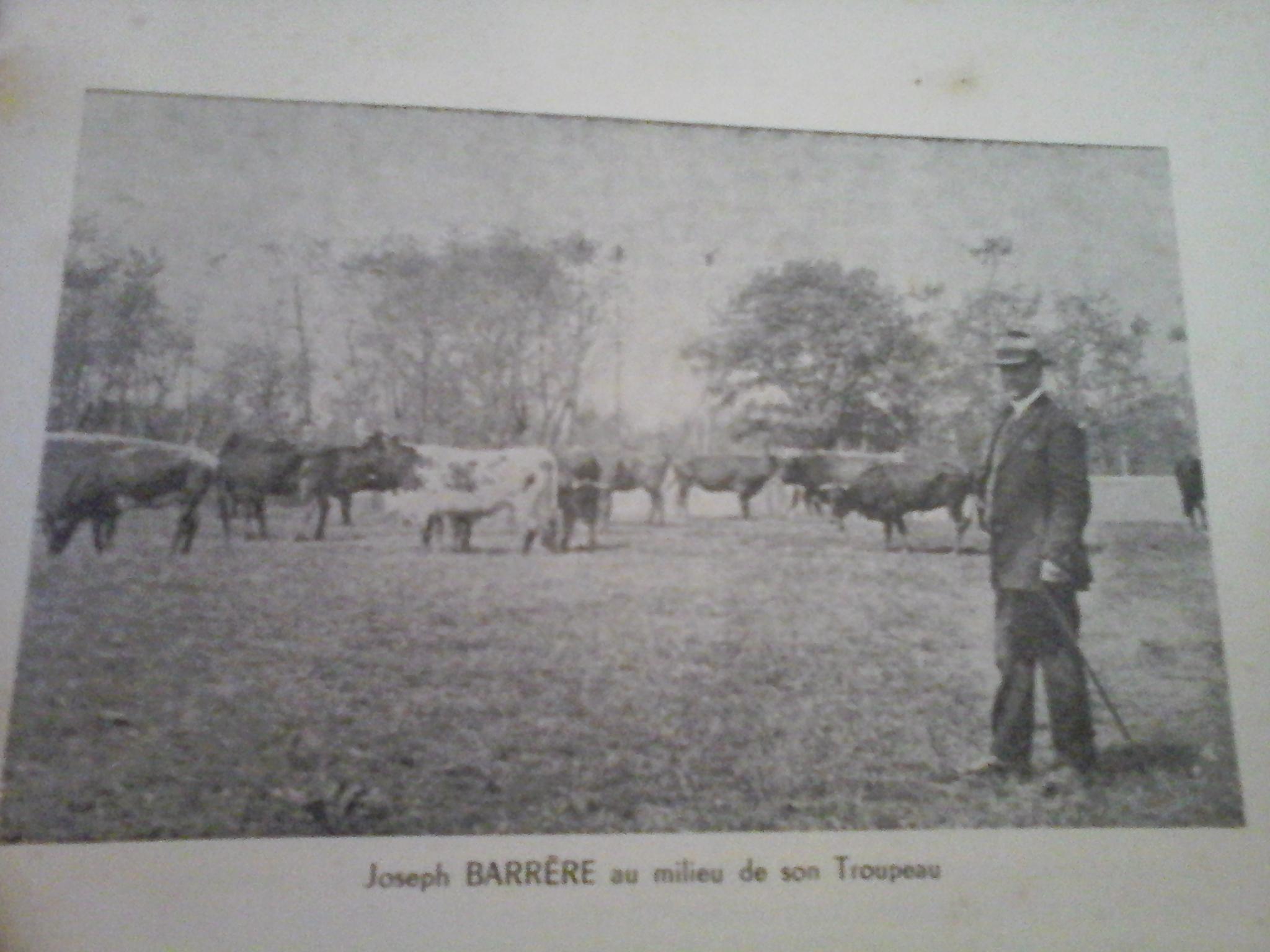 Joseph Barrère au milieu de son troupeau